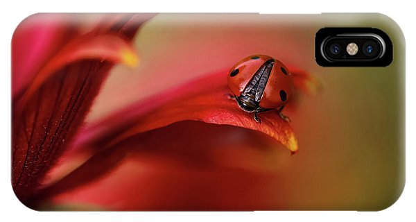 Simply Red Phone Case by Mandy Disher