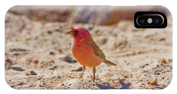 Psi iPhone Case - Sinai Rosefinch (carpodacus Synoicus) by Photostock-israel