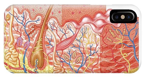 Skin Layers Phone Case by Asklepios Medical Atlas