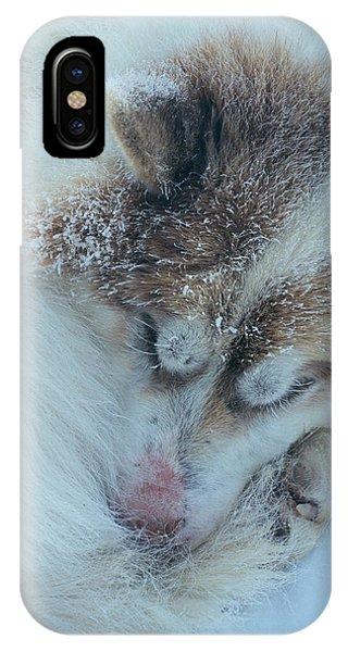 Sled Dog iPhone Case - Sleeping Husky Dog by Simon Fraser/science Photo Library