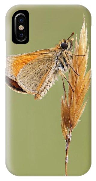 Small Skipper Butterfly Phone Case by Heath Mcdonald