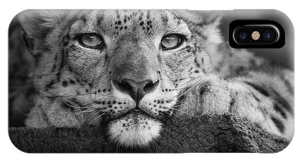 Snow Leopard iPhone Case - Snow Leopard by David Williams