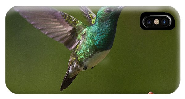 Snowy-bellied Hummingbird IPhone Case
