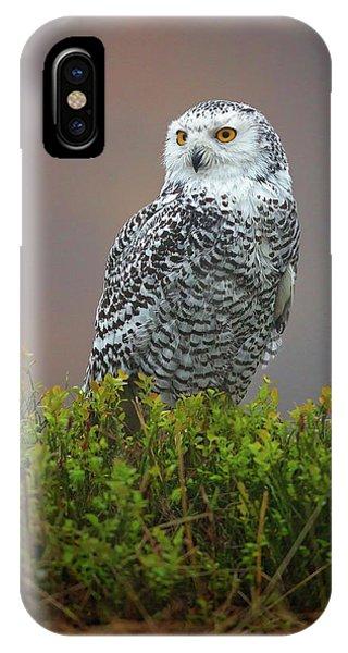 Snowy iPhone Case - Snowy Owl by Milan Zygmunt