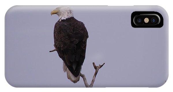 Solo  Bald Eagle IPhone Case