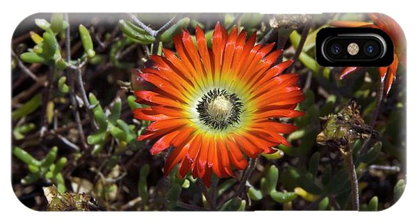 South African Flowers Phone Case by Dr P. Marazzi/science Photo Library