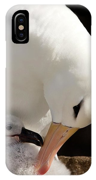 Albatross iPhone Case - South Atlantic, Falkland Islands, New by Jaynes Gallery