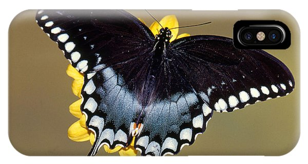 Pterygota iPhone Case - Spicebush Swallowtail Butterfly by Millard H Sharp
