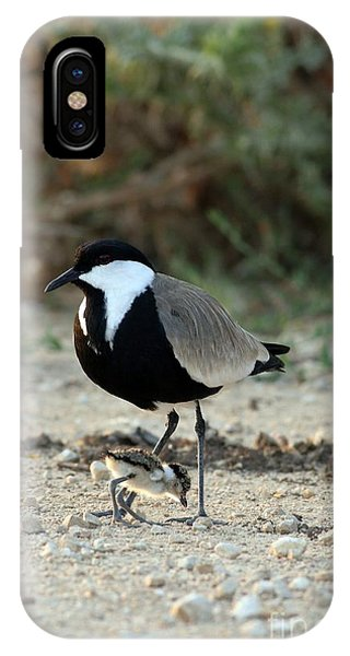 Spur-winged Plover And Chick IPhone Case