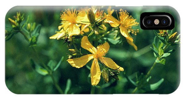 St John's Wort Flowers Phone Case by Th Foto-werbung/science Photo Library