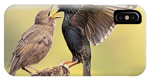 Starlings IPhone Case