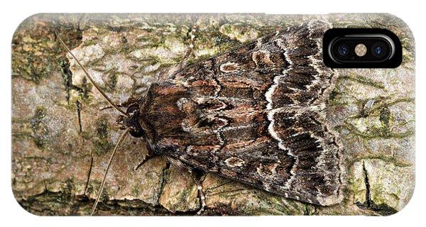 Straw Underwing Moth Phone Case by Nigel Downer