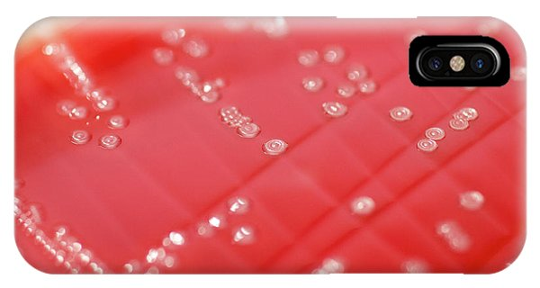 Scarlet iPhone Case - Streptococcus Pyogenes Bacteria Culture by Daniela Beckmann