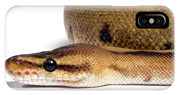 Infrared Radiation iPhone Case - Striped Royal Python by Pascal Goetgheluck/science Photo Library