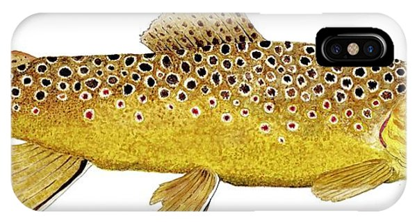 Study Of A Brown Trout IPhone Case