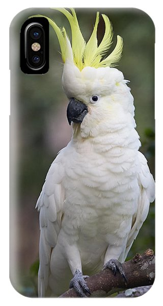 Martin iPhone Case - Sulphur-crested Cockatoo Displaying by Martin Willis