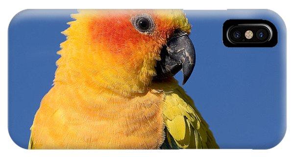 Sun Conure IPhone Case
