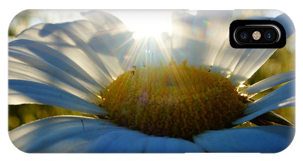 Sun Flower Phone Case by Kandids By Katy
