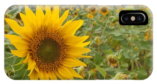 Sun Flower Fields IPhone Case