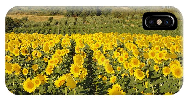 Sunflowers In Arezzo IPhone Case