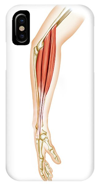 Superficial Muscles Of Forearm Phone Case by Asklepios Medical Atlas