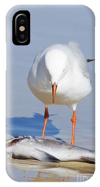 Surprised Seagull IPhone Case
