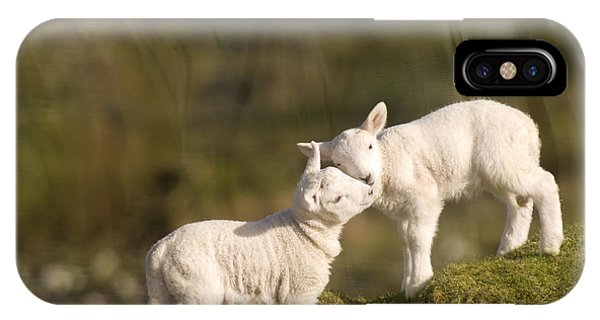Farm iPhone Case - Sweet Little Lambs by Angel Ciesniarska