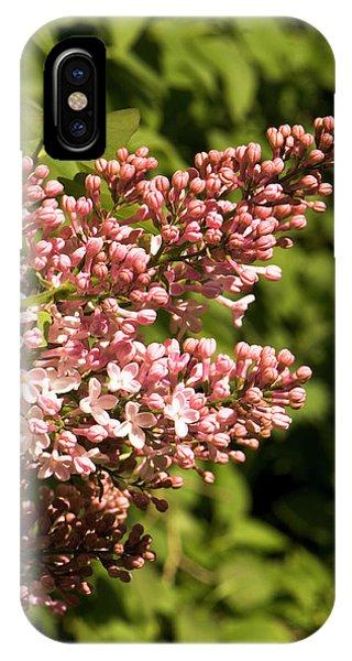 Cultivar iPhone Case - Syringa 'lavaliensis' Flowers by Adrian Thomas