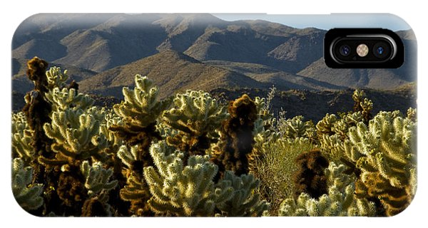Teddy Bear Cholla iPhone Case - Teddy Bear & Jumping Cholla by Mark Newman