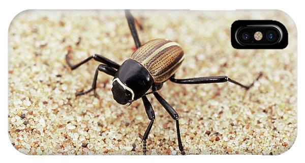 Amazing Detritus Feeder IPhone Case   Tenebrionid Beetle By Sinclair  Stammers/science Photo Library