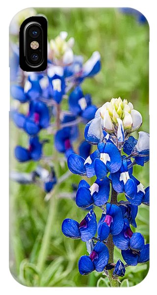 Texas Bluebonnets IPhone Case