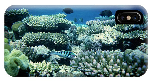 Barrier Reef iPhone Case - The Great Barrier Reef by Andrew Mcclenaghan/science Photo Library