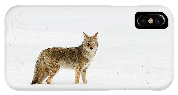 The Longest Season IPhone Case