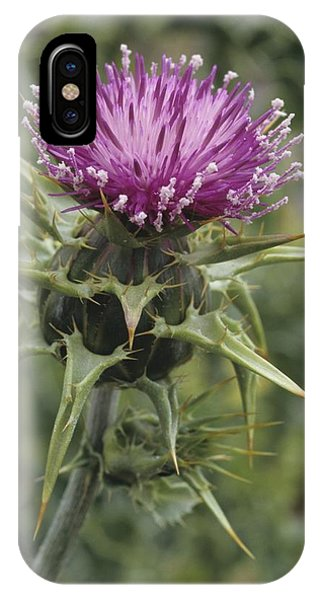 Thorny Beauty  IPhone Case