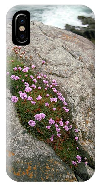 Thrift (armeria Maritima Miller) Phone Case by Chris Dawe/science Photo Library