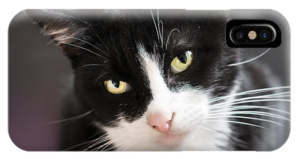 Tiggles IPhone Case