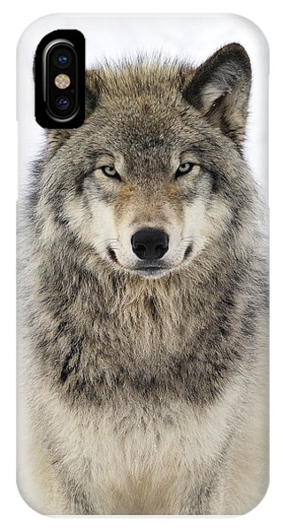 Eyes iPhone Case - Timber Wolf Portrait by Tony Beck