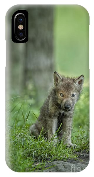 Timber Wolf Pup IPhone Case