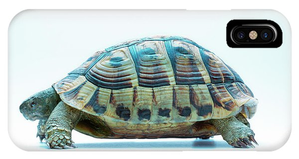 Tortoise Phone Case by Gustoimages/science Photo Library
