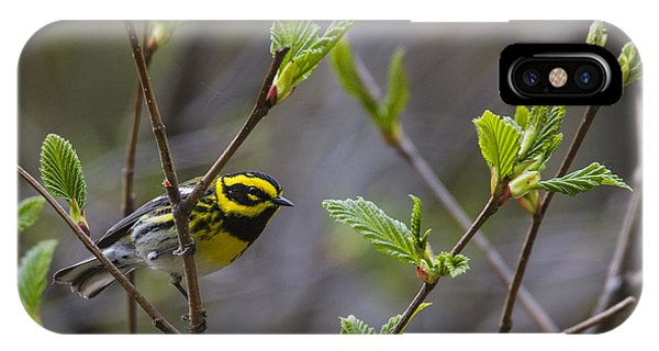 Townsends Warbler IPhone Case