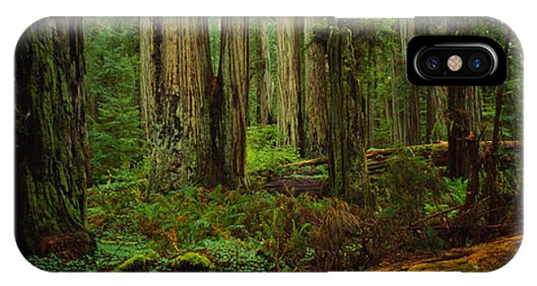 Trees In A Forest, Hoh Rainforest IPhone Case