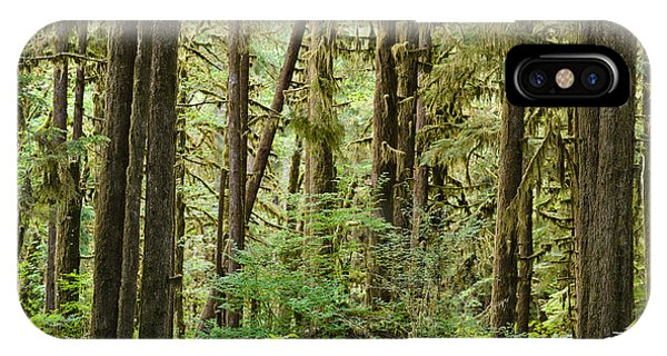 Olympic National Park iPhone Case - Trees In A Forest, Quinault Rainforest by Panoramic Images