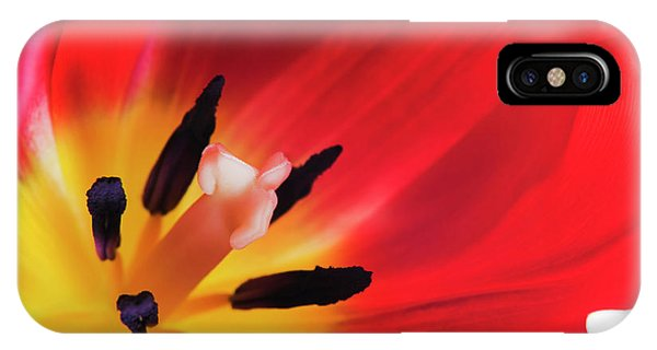 Pistil iPhone Case - Tulip's Reproductive Structures by Gustoimages/science Photo Library