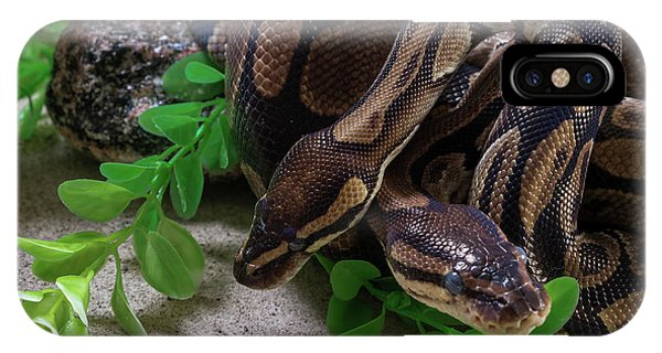 Two Burmese Pythons Python Bivittatus IPhone Case