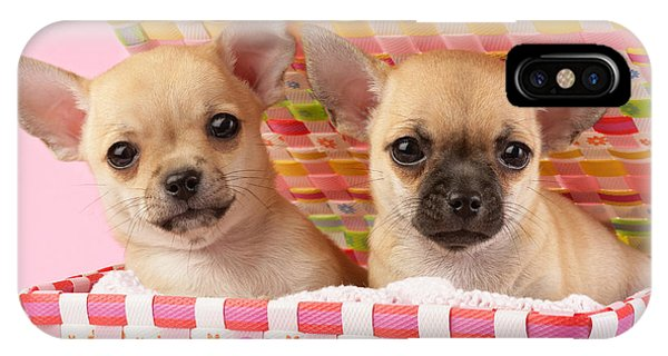 Chihuahua iPhone Case - Two Chihuahuas by MGL Meiklejohn Graphics Licensing
