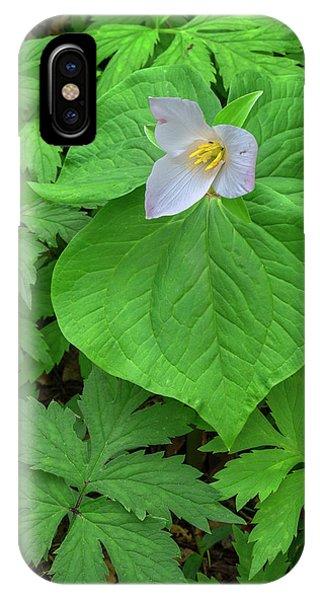 Close Focus Floral iPhone Case - Usa, Oregon, Tryon Creek State Natural by John Barger