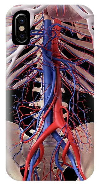 Vascular System Of Human Abdomen Phone Case by Sebastian Kaulitzki/science Photo Library