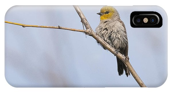 IPhone Case featuring the photograph Verdin by Tam Ryan
