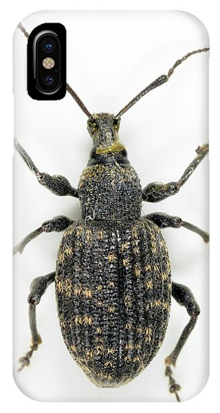 Coleoptera iPhone Case - Vine Weevil by Sinclair Stammers
