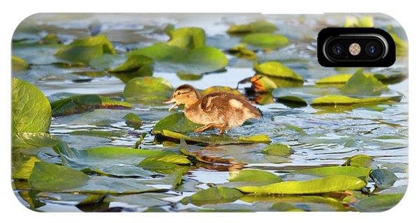 Wa, Juanita Bay Wetland, Mallard Duck Phone Case by Jamie and Judy Wild